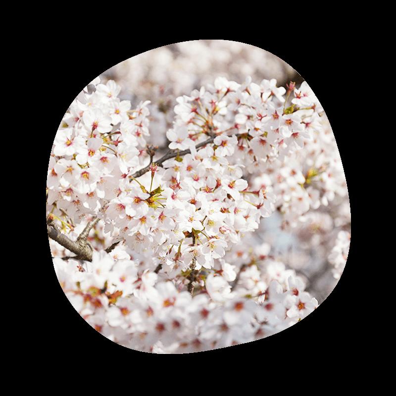 150402_flower_thum