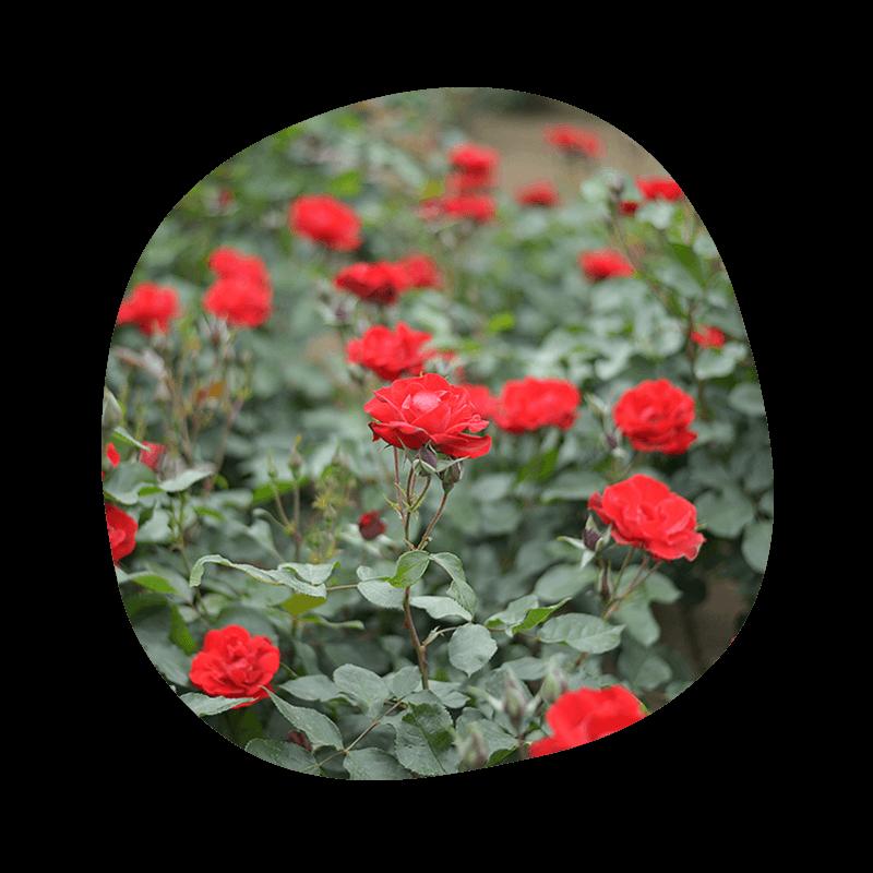 150509_flower_thum